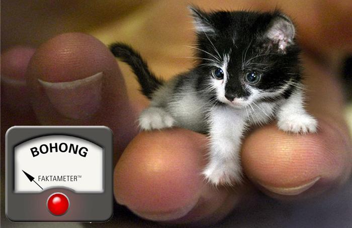 Mr. Peebles adalah Kucing Terkecil di Dunia?