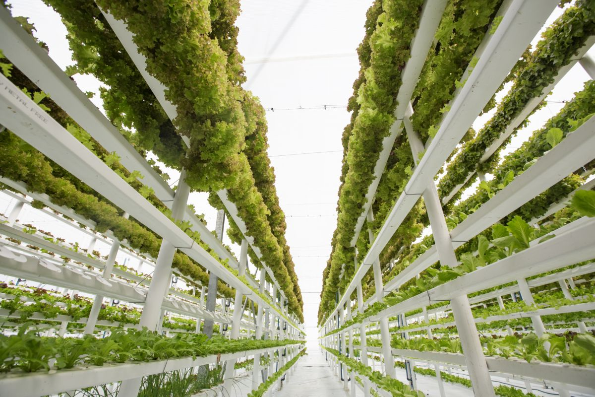 Urban Farming, Solusi Kreatif Memenuhi Kebutuhan Pangan Kaum Urban