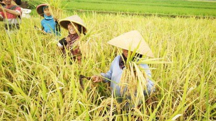 nilai tukar petani meningkat