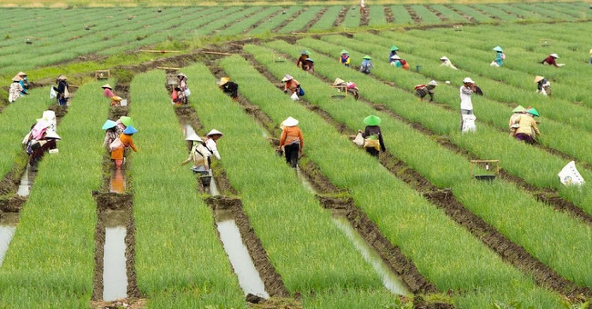 Mengatasi Tanah Masam Dan Basa Gerbang Pertanian Summer