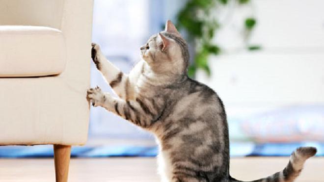 Sering merusak jadi alasan dibuat alat pengusir kucing