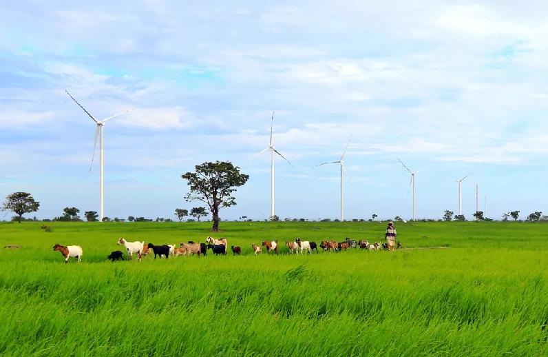 Potensi Pengembangan Listrik Tenaga Angin Indonesia, Berikut Sebaran Lokasinya