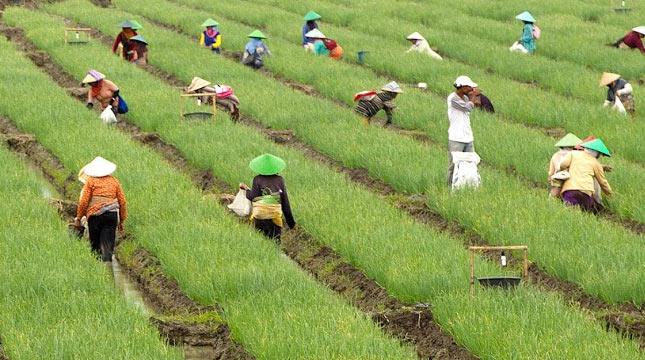 Banyuwangi Tuan Rumah Pertanian Agro Zaman Milenial