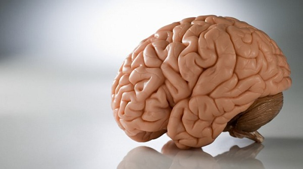 Otak Tiruan Kini dapat Dibuat dengan Menggunakan Komputer Super Cerdas