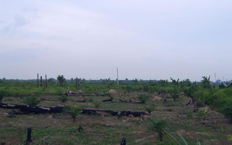 Komisi IV: Cadangan Lahan untuk Konservasi Hutan Harus Ditingkatkan
