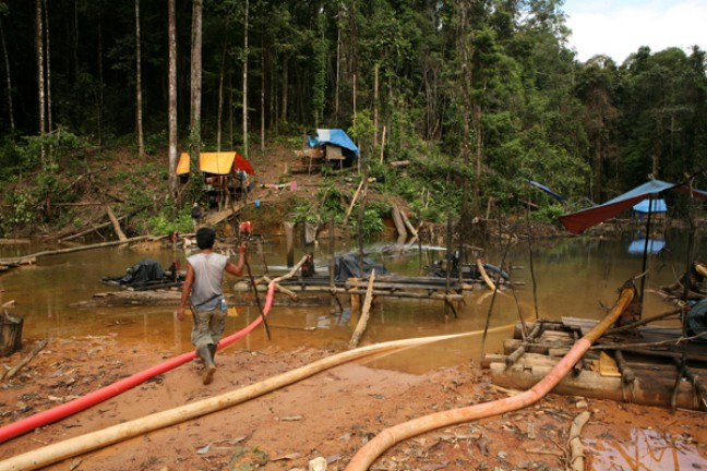 Dilaporkan 71 Persen Kawasan Konservasi Tahura Bukit Soeharto Kritis