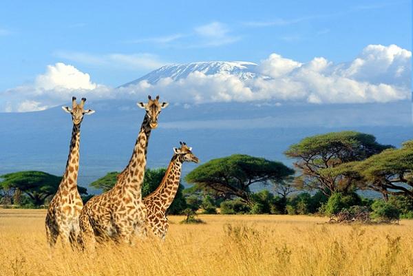 Pilihan Destinasi Wisata untuk Liburan Awal Tahun