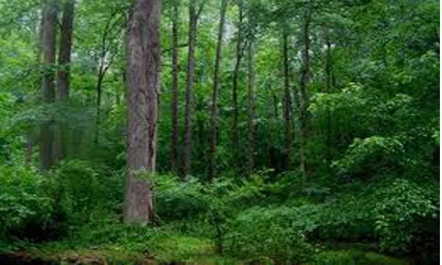 Restorasi Ekosistem