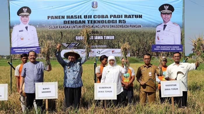 uji coba padi di jawa timur oleh Khofifa Indar Parawangsa
